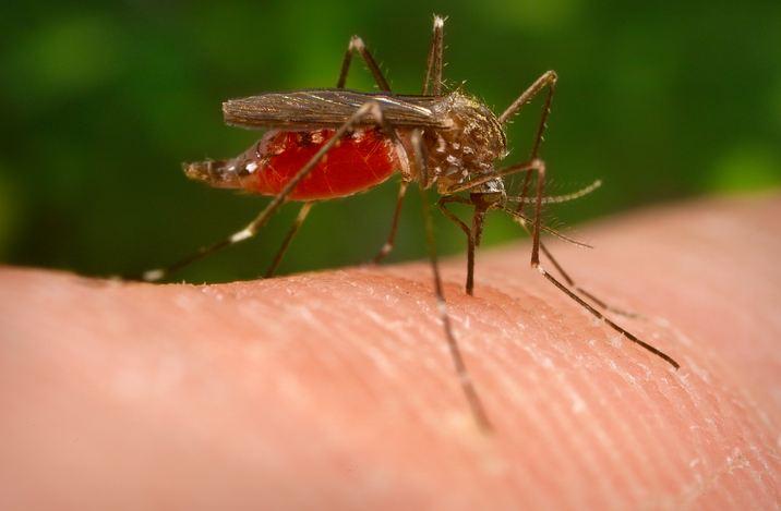 चिकुनगुनिया के इलाज के लिए घरेलू नुस्खे जो ऐलोपैथी से हैं बेहतर Chikungunya Gharelu Nuskhe
